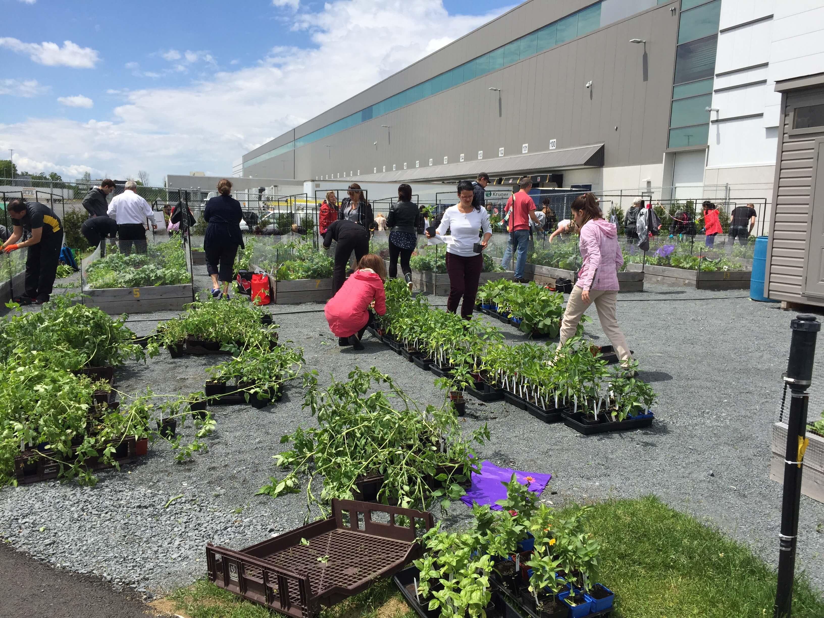 Best Soil Raised Vegetable Garden
