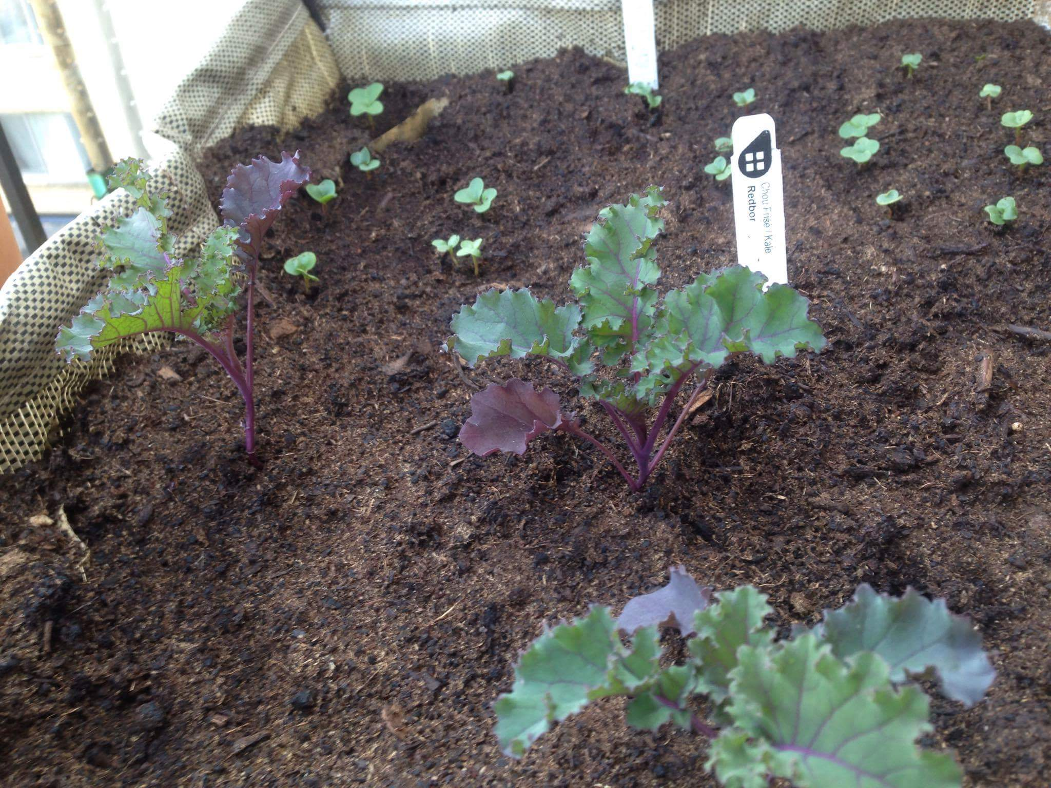 Little Acre Garden Package Urban Seedling