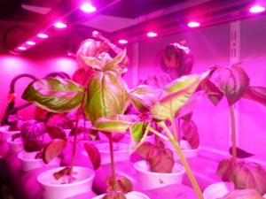LED urban farming Gent
