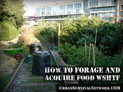 How to Forage For Food