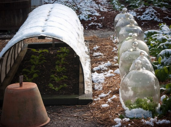 Cloches and Polytunnel - survival gardening