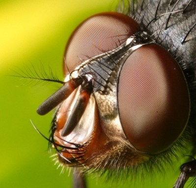 insect01