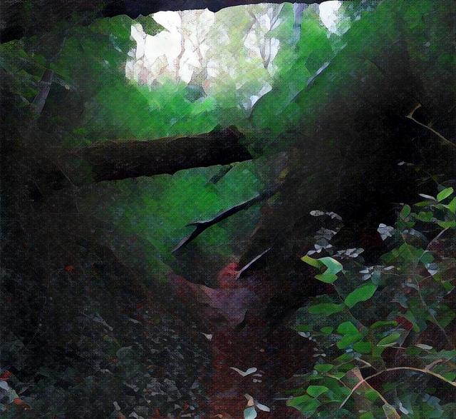 Bosque en Burgos