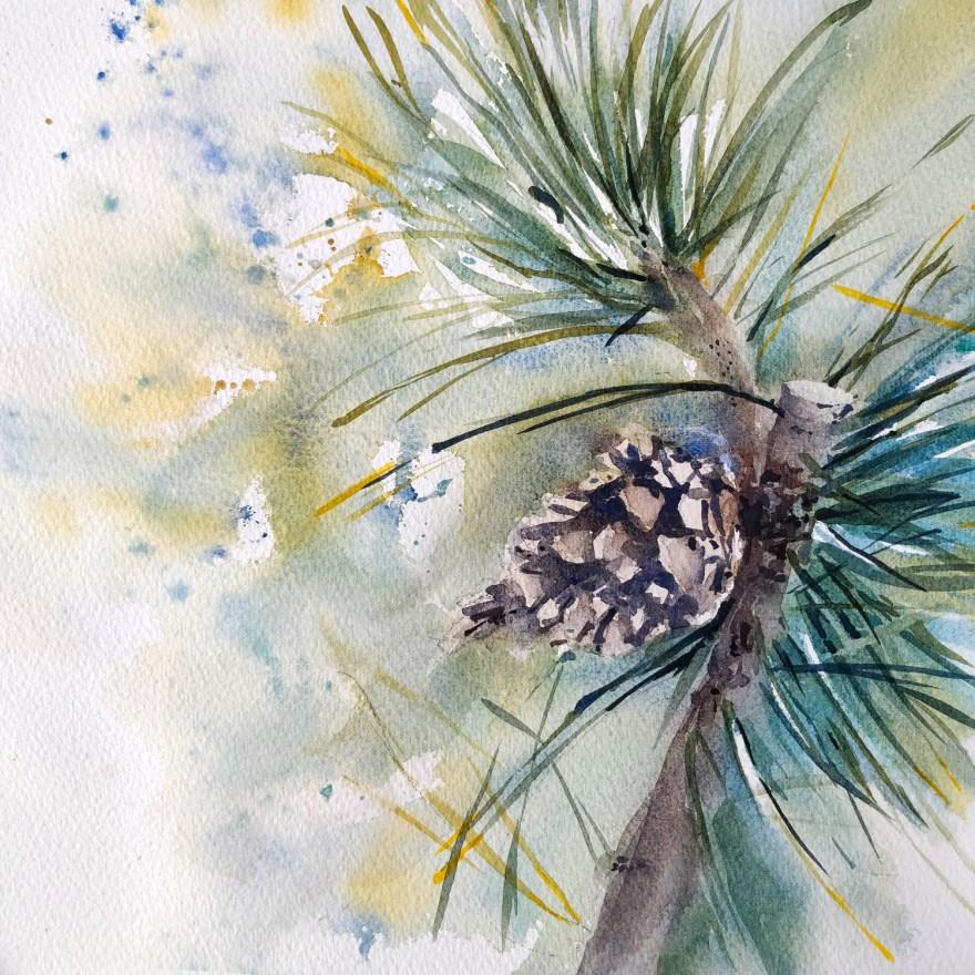 Pine cone in watercolor