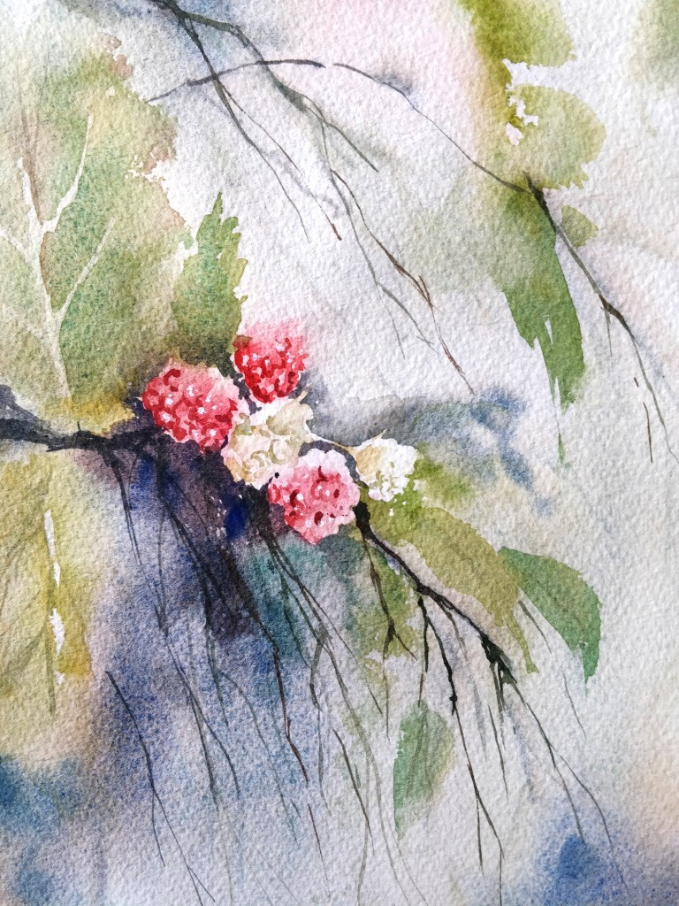 Raspberry in watercolor