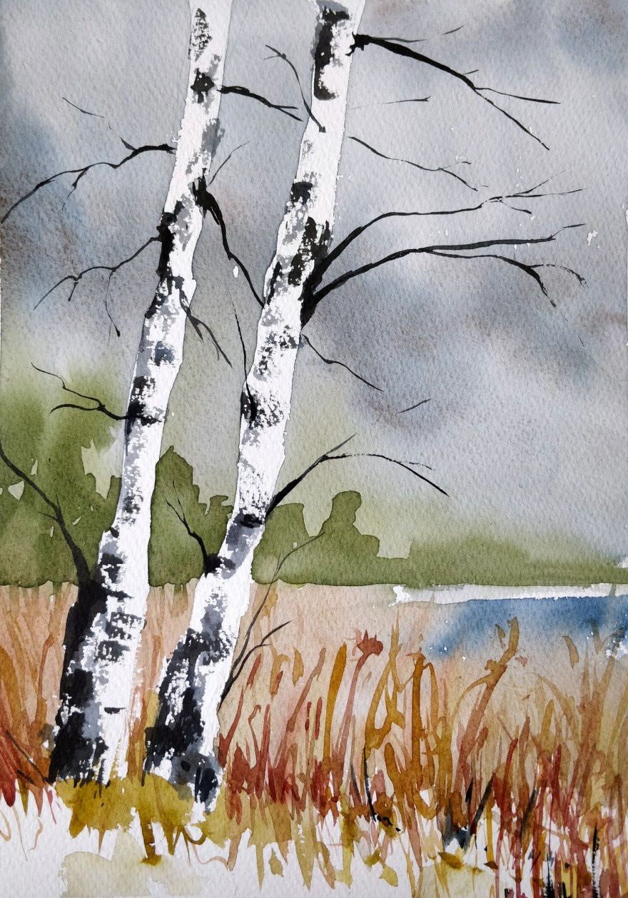 Birch tree in watercolor