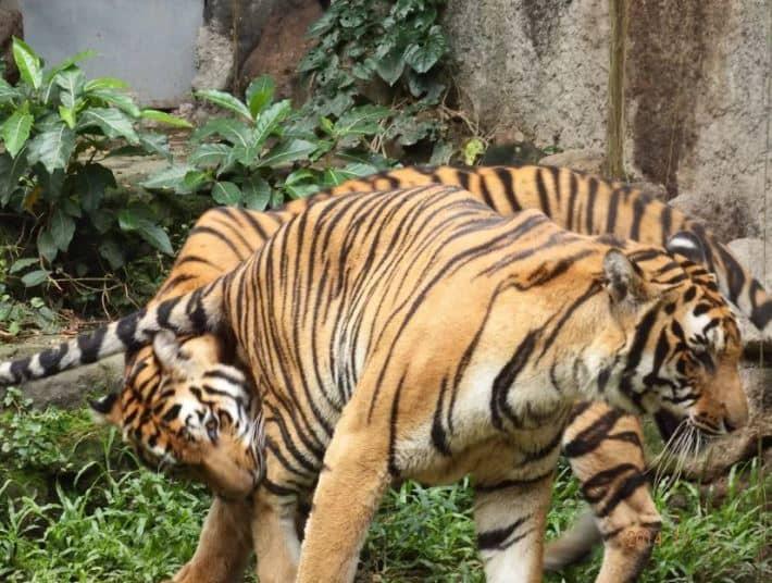 حديقة حيوانات مانيلا من اهم مناطق سياحية في مانيلا الفلبين