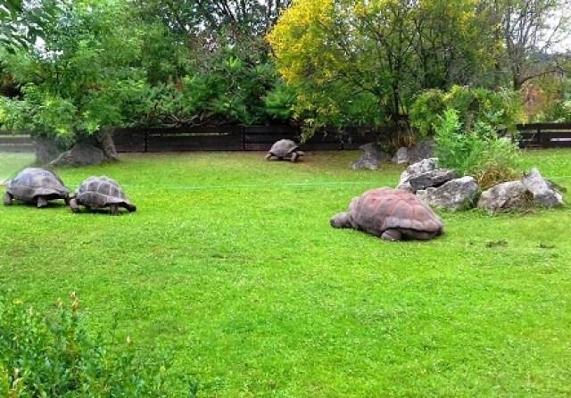 جناح السلاحف الضخمة في حديقة حيوانات براغ - صور مدينة براغ