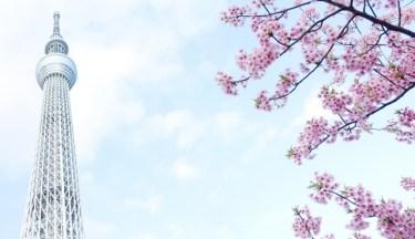 東京の伝統工芸品「江戸漆器」とは?