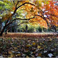 Montevideo Jardín Botánico su historia Uruguay por dentro