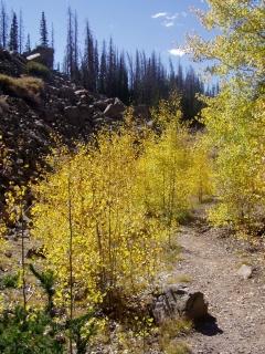 Alpine Forest in Utah
