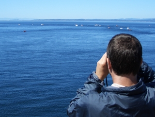 Looking for Orcas