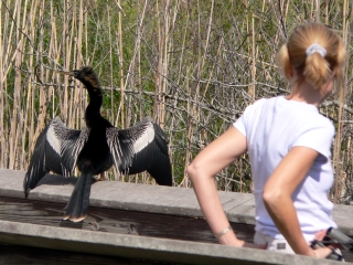 Anhinga and Friend