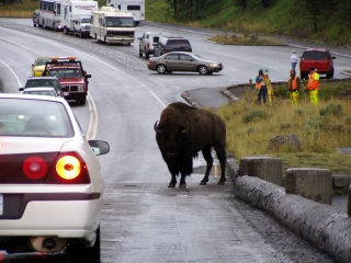 Yellowstone NP Roadblock