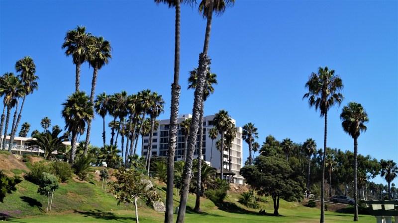 Palmen in Santa Monica