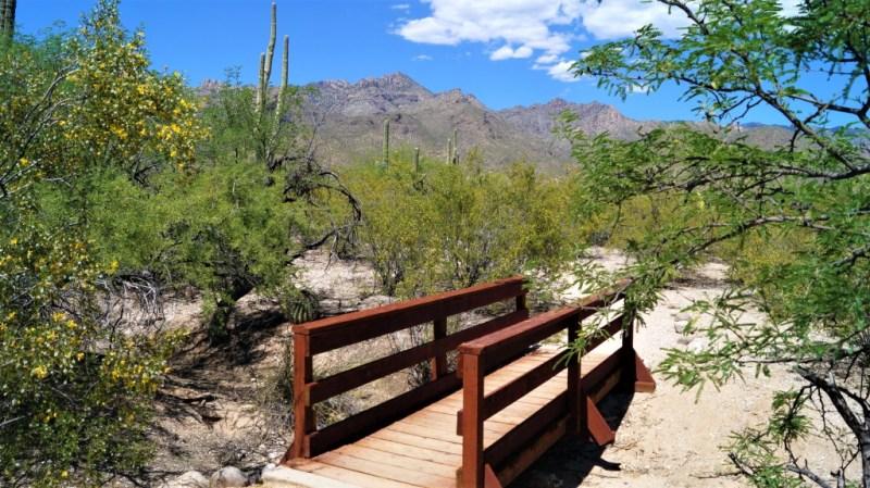 Brücke im Sabino Canyon