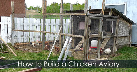 Build An Aviary How To Build Aviary For Chicken Coop