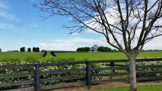 Die schönen Farmen in Kentucky