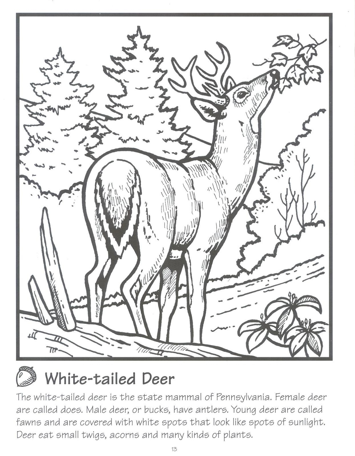 Turkey And Whitetail Deer Pages Coloring Pages