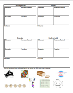 Click Here to Get your Macromolecule Graphic Organizer