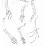 homologous-structures