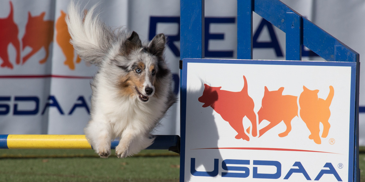 USDAA Title Mania & All-Around Dog Agility Championships