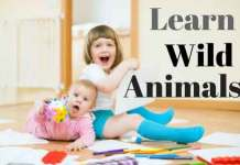 Learn-Wild-Animals