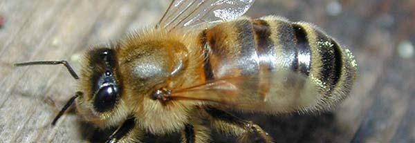 How many bees work for a teaspoon?