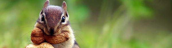 There's a country in the world that arrested squirrels for spying