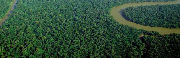 There' s a government that donated $1bn to save the Amazon rainforest
