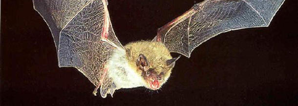 Can bats take off from the ground?