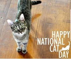 National Cat Day trivia: 21 amazing facts about this awareness day