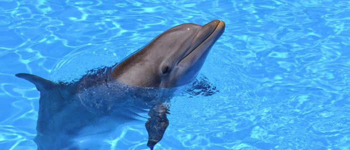36 facts about dolphins!