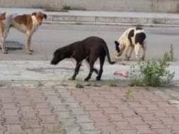 randagi cani