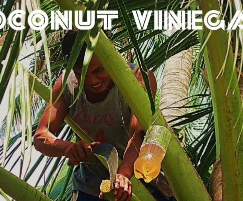 Top Benefits of Coconut Vinegar and Its Contains