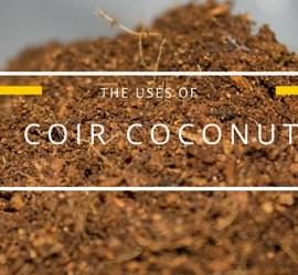 coir coconut