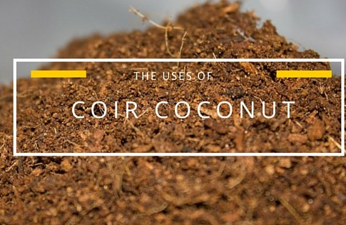 The Uses of Coir Coconut in Hydroponic Industry