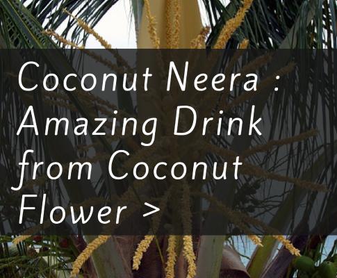 Coconut Neera : Amazing Drink from Coconut Flower