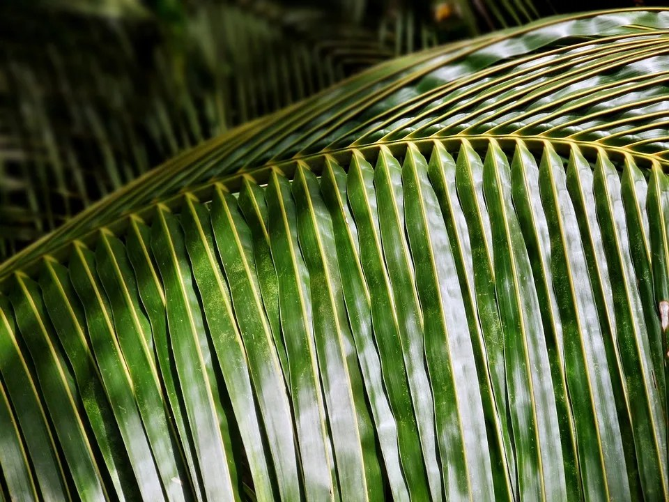 What Are The Things Can Make Use Of Coconut Tree Leaves