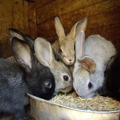 Комбикорм для кроликов ПК-90 с травяной мукой Комбикорм для кроликов ПК-90 с травяной мукой - 40 кг/меш
