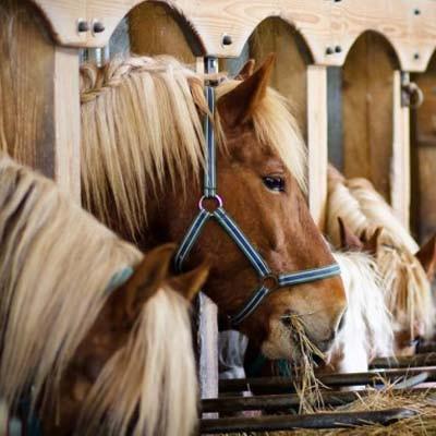 Комбикорм для лошадей К-72