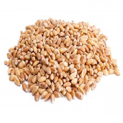 Пшеница Пшеница - 40 кг/меш