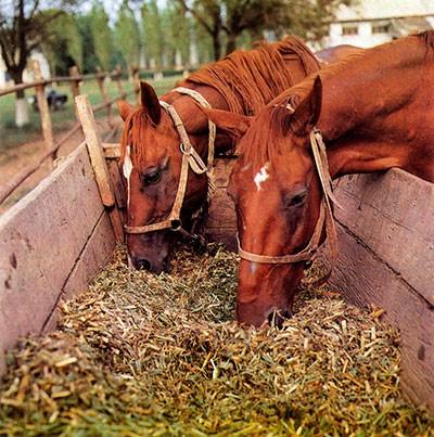 Комбикорм для лошадей цена – купить комбикорм для лошадей оптом цена