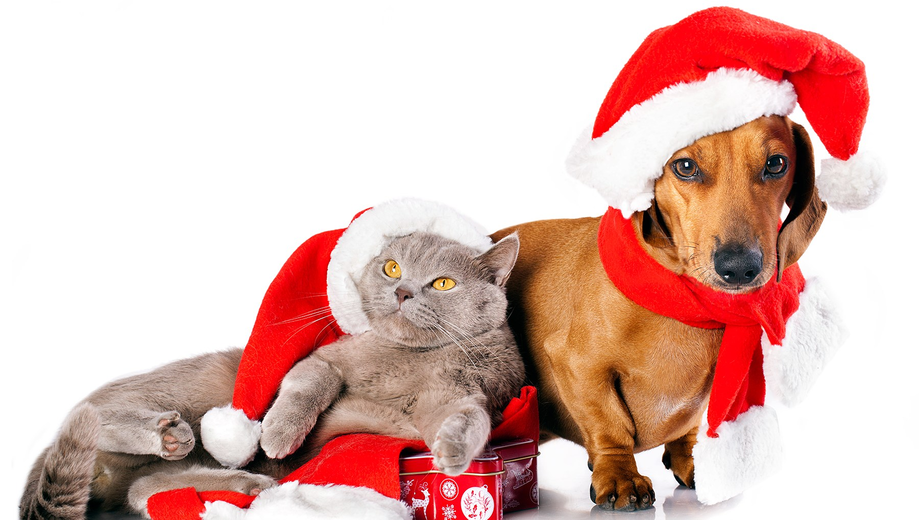 Christmas pet horoscopes