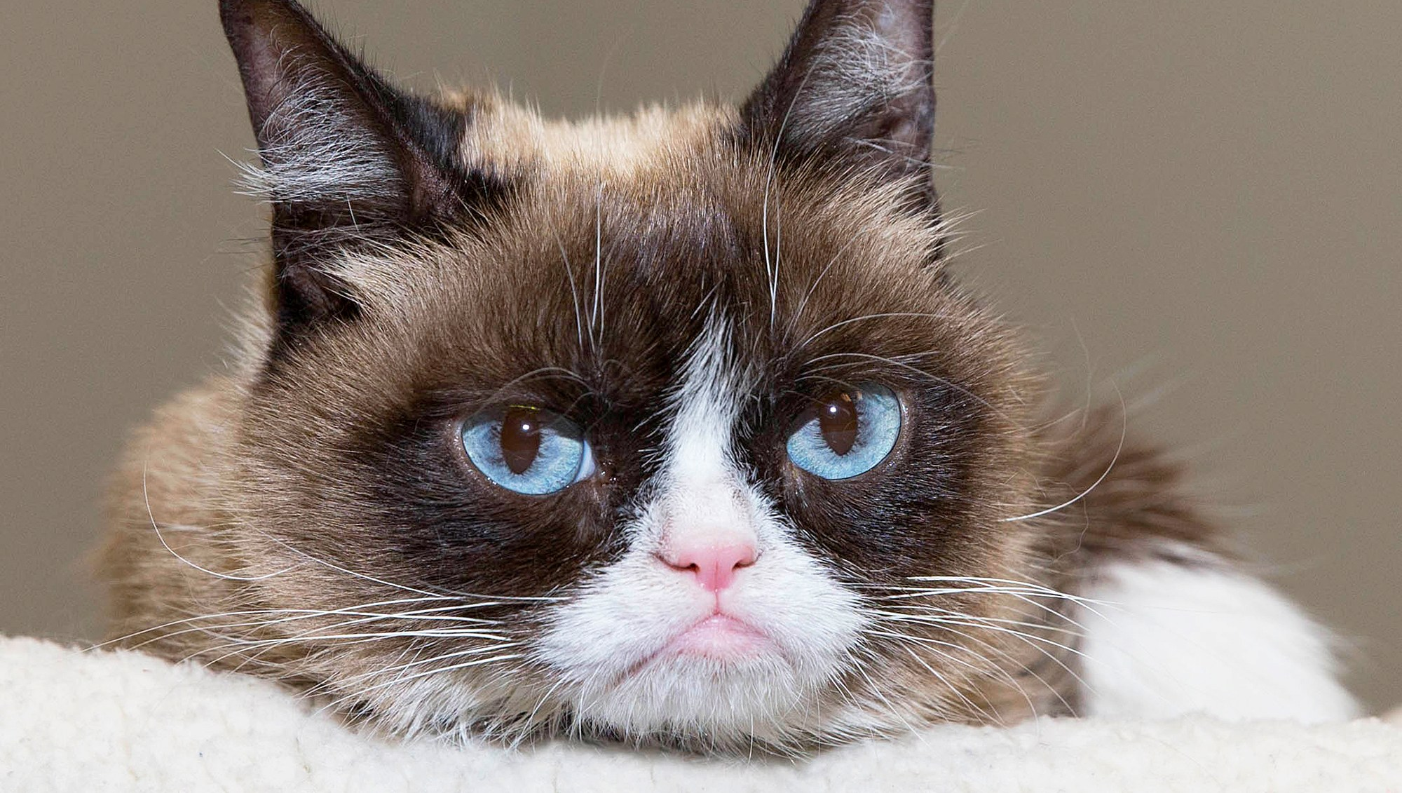 Grumpy Cat attends SXSW 2016 in Austin, Texas.