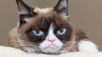 Grumpy Cat attends SXSW 2016 in Austin, Texas.
