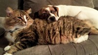 Whatto Do When Your Pet Getsthe Flu