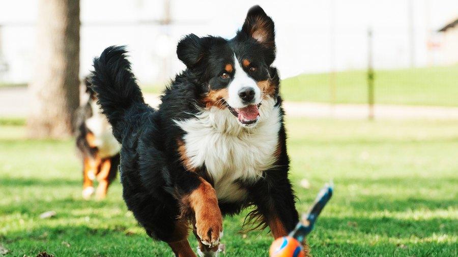 dog-at-park-2