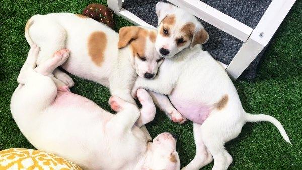 Nutrish Puppy Cam