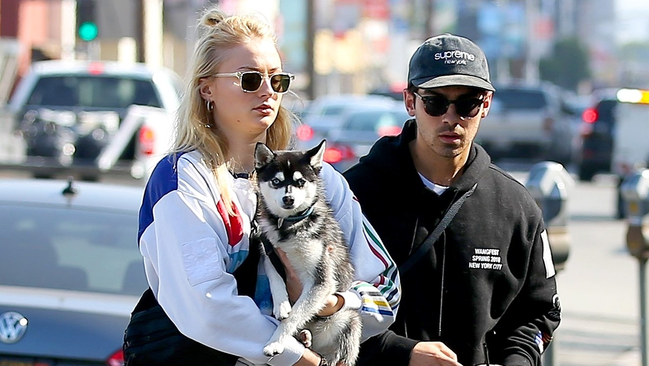 Joe-Jonas-and-Sophie-Turner-Adopt-Dog